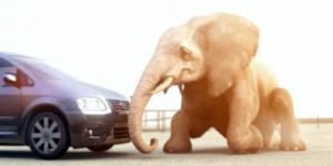 "Furia ""Elephant"""